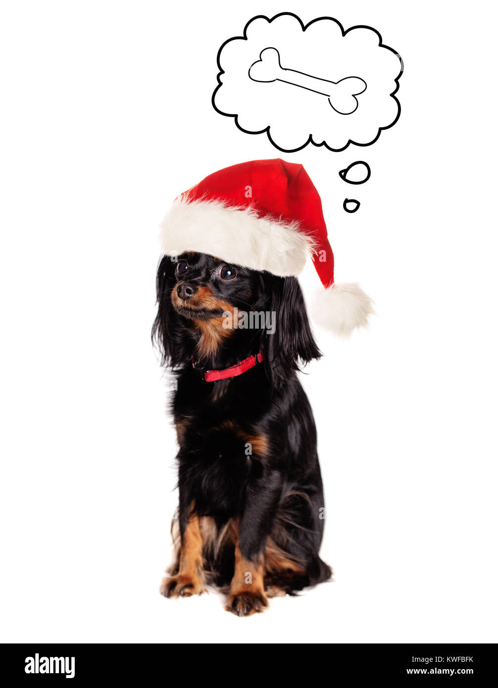 Dog in Santa Hat dreaming on Tasty Food on White Background - Stock Image