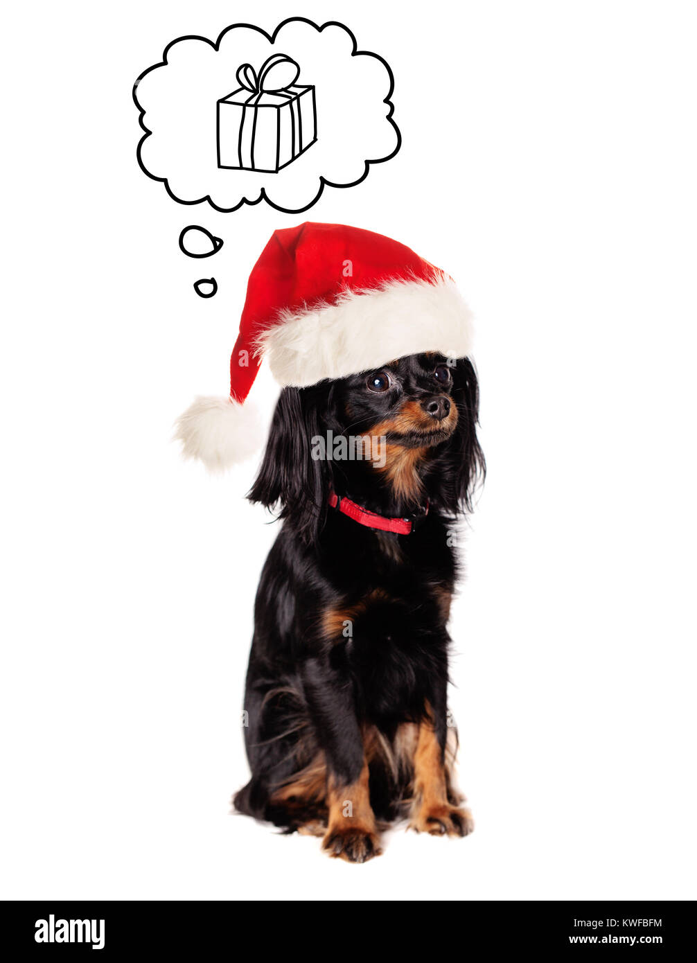Little Dog in Santa Hat on White Background - Stock Image