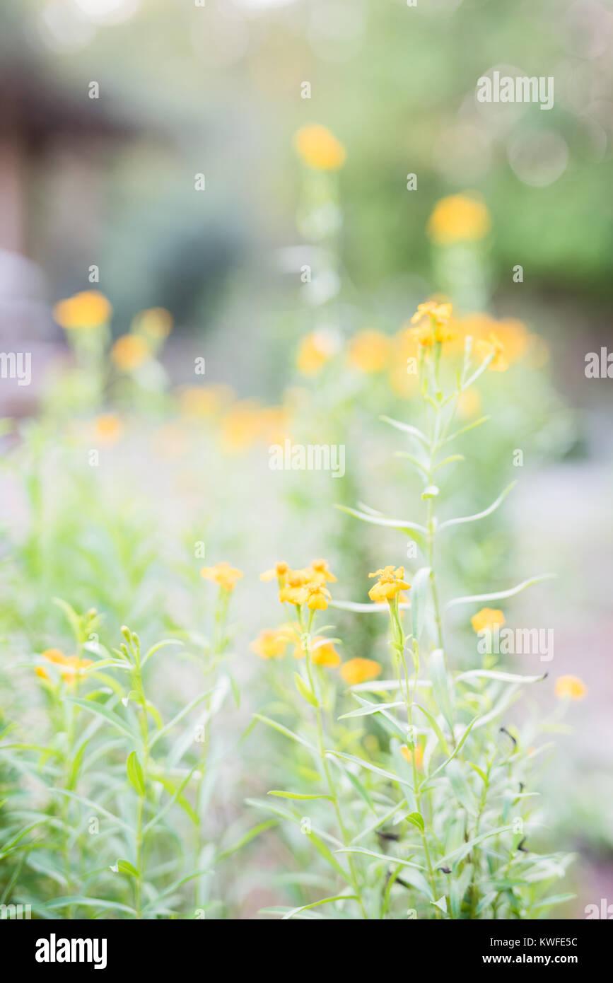 Tiny Yellow Flowers Stock Photos Tiny Yellow Flowers Stock Images