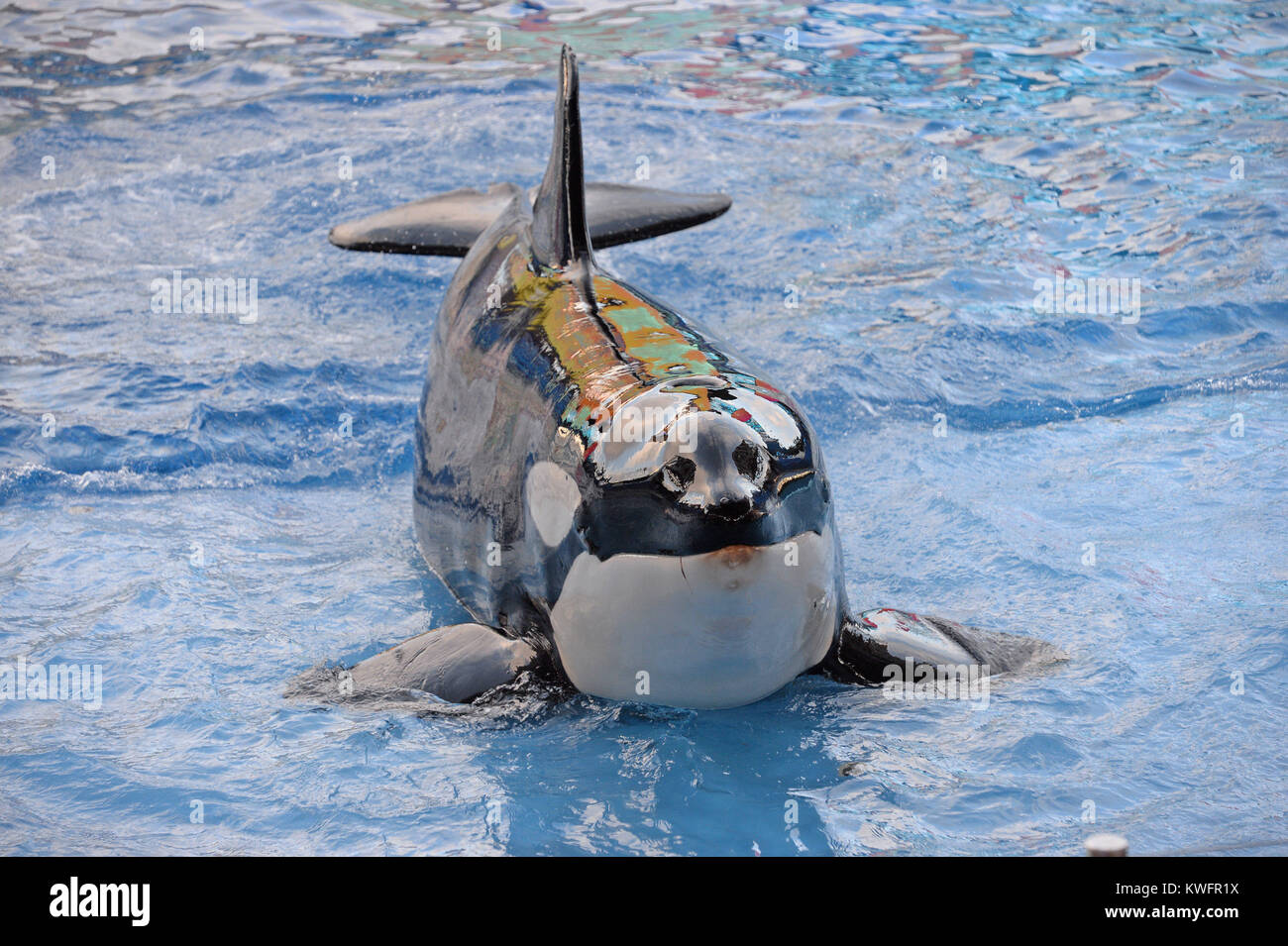ORLANDO, FL - AUGUST 15: SeaWorld has announced a new 10 million-gallon killer whale environment in San Diego, nearly - Stock Image