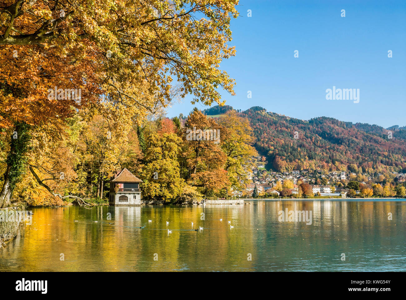 Herbstlandschaft am Fluss Aare und Thuner See, Wallis, Schweiz | Autumn at Aare River and Lake Thuner, Wallis, Switzerland - Stock Image