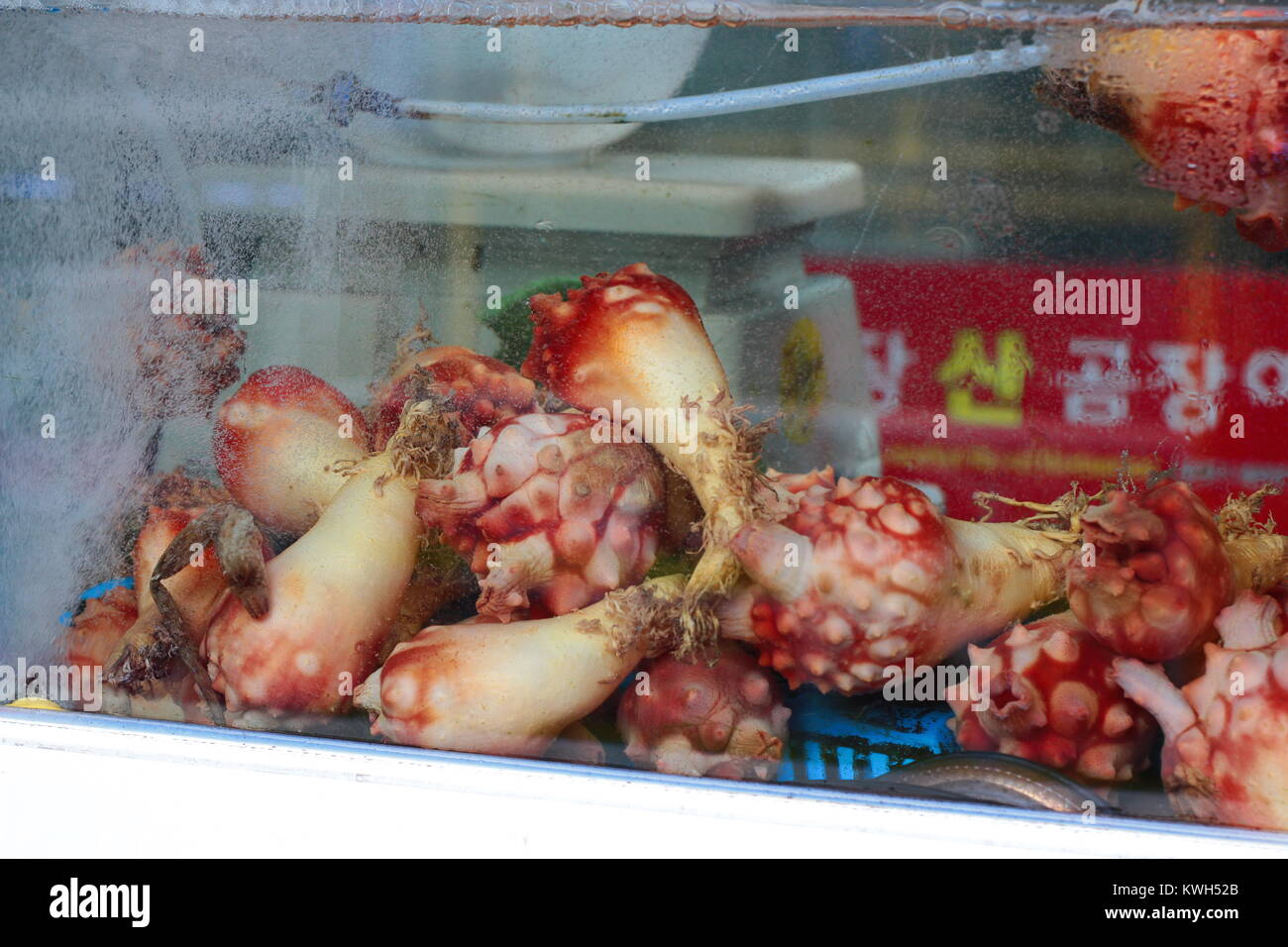sea squirt food young lesbian porn stars
