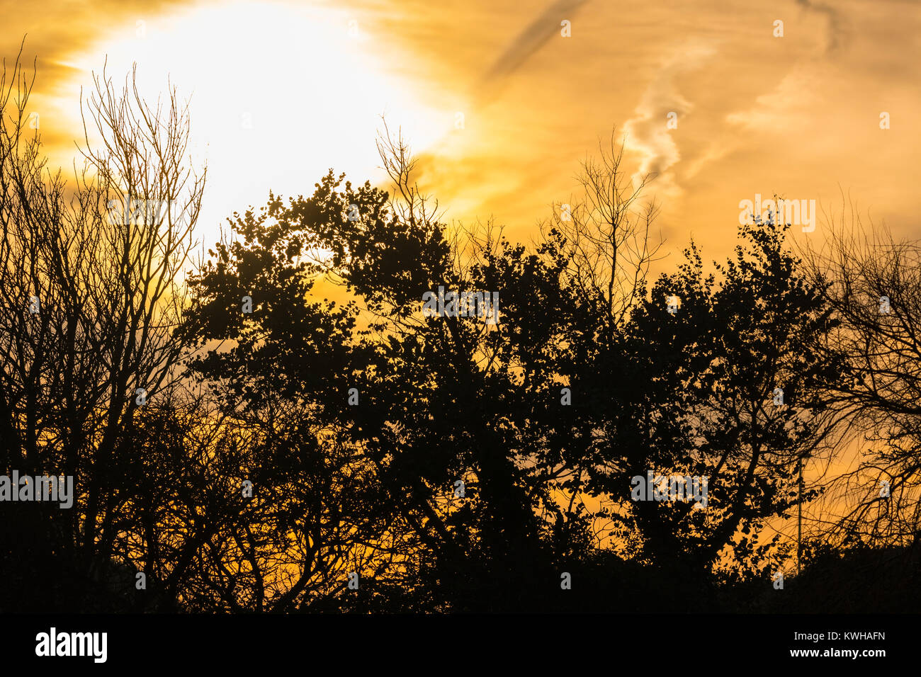 Sun rising through trees in Winter in the UK. - Stock Image