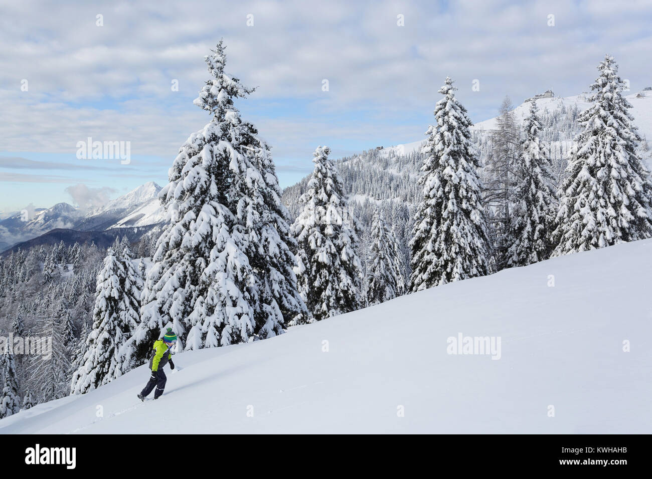Young boy in yellow winter jacket hiking uphill in fresh snow among frozen spruces, Krvavec, Slovenia. - Stock Image