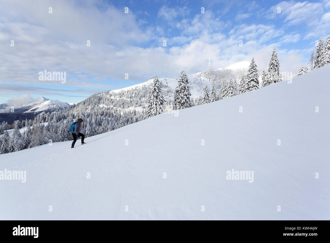 Woman in active outfit with a backpack hiking uphill in winter conditions on a mountain between spruces covered - Stock Image