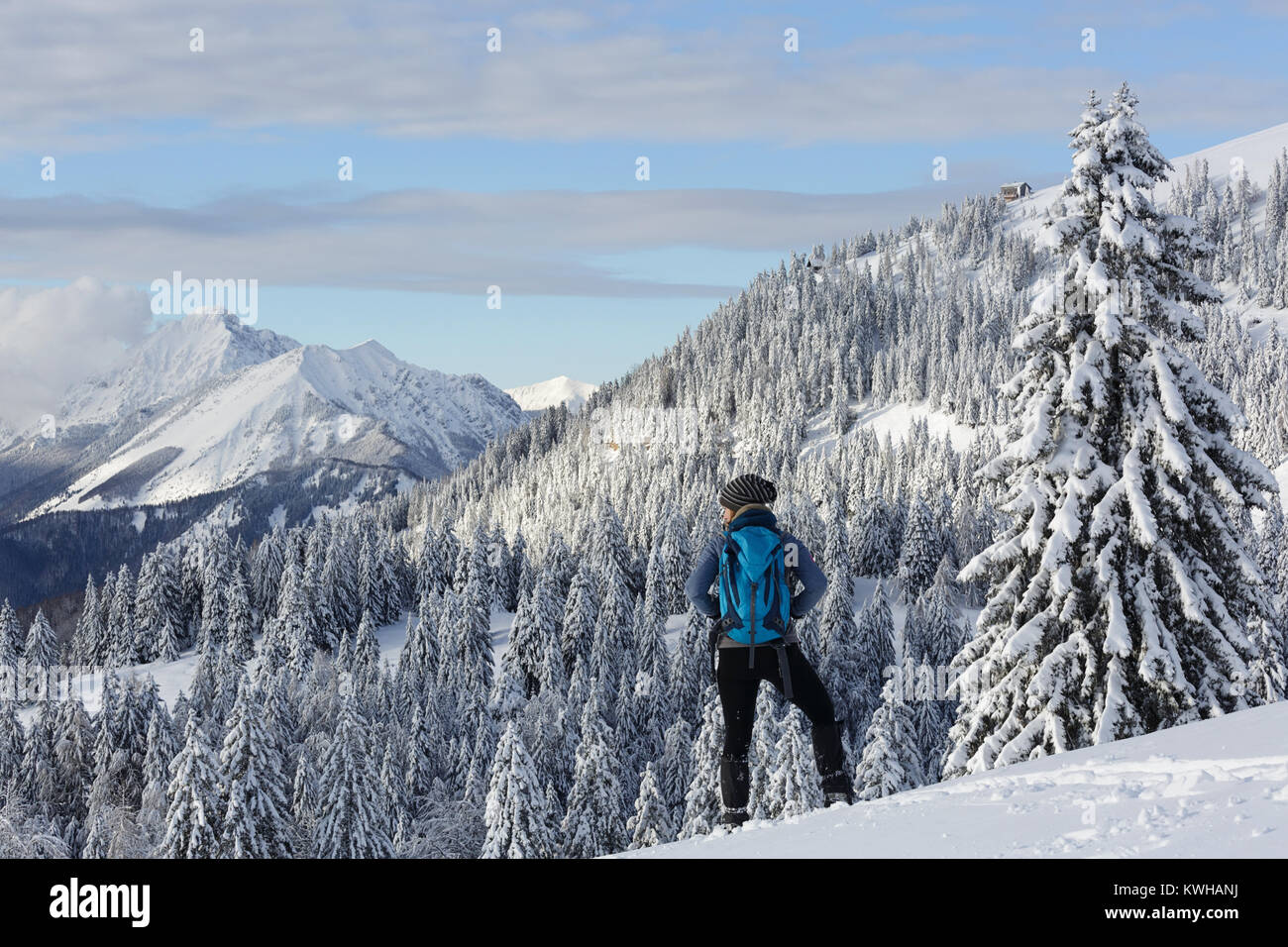 Woman hiker in active outfit standing on a hill with spruces covered with snow and enjoying the winter mountain - Stock Image