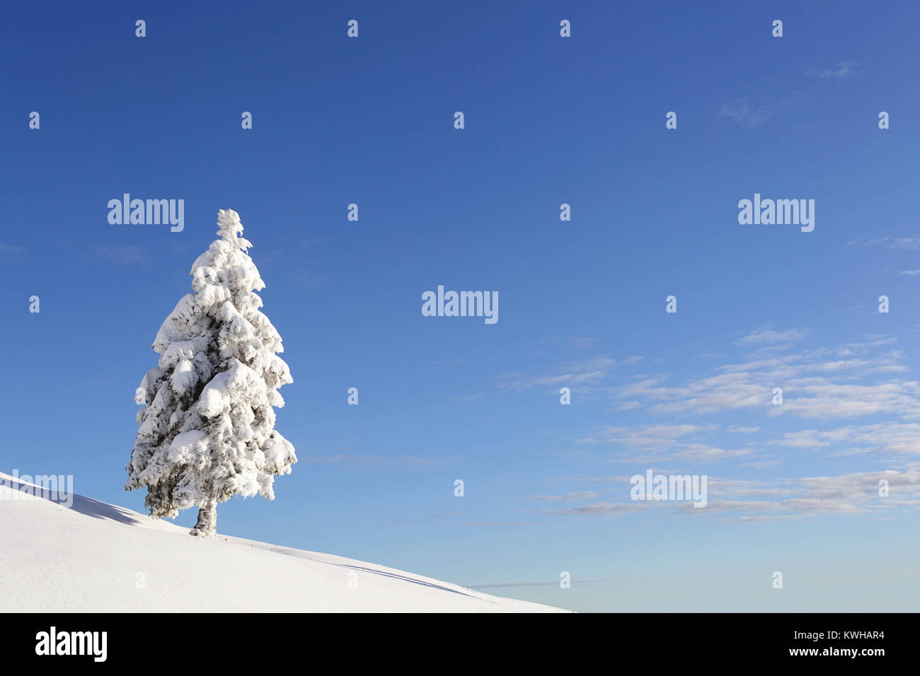 Winter wonderland, frozen spruces on a snow covered mountain, Krvavec, Slovenia. - Stock Image