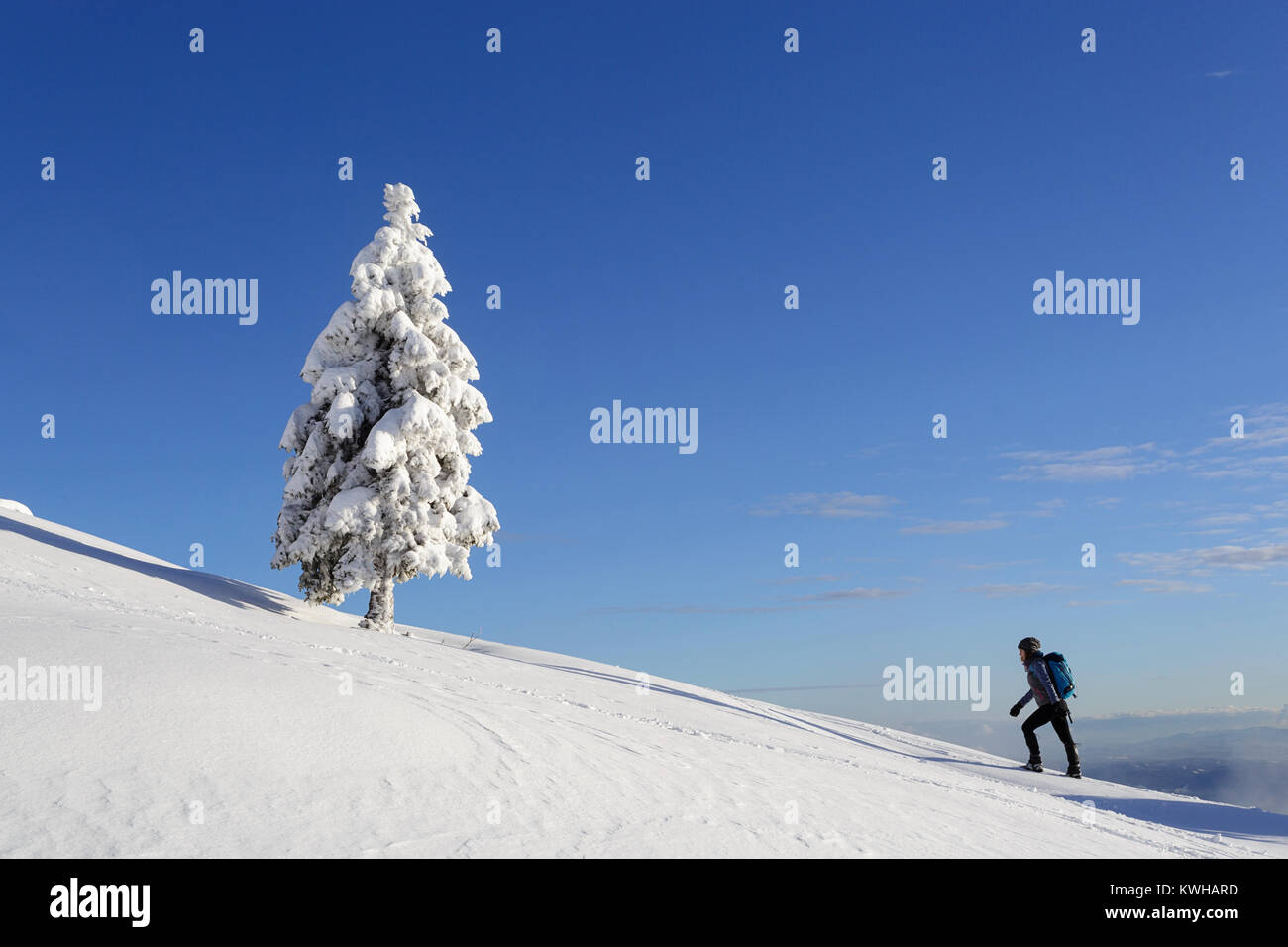 Woman in active outfit hiking in winter conditions on a mountain between spruces covered with snow, Krvavec, Slovenia. - Stock Image