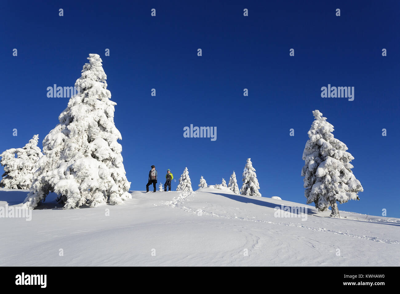 Mother and son hiking on the snow covered mountain between frozen spruces, Krvavec, Slovenia. - Stock Image