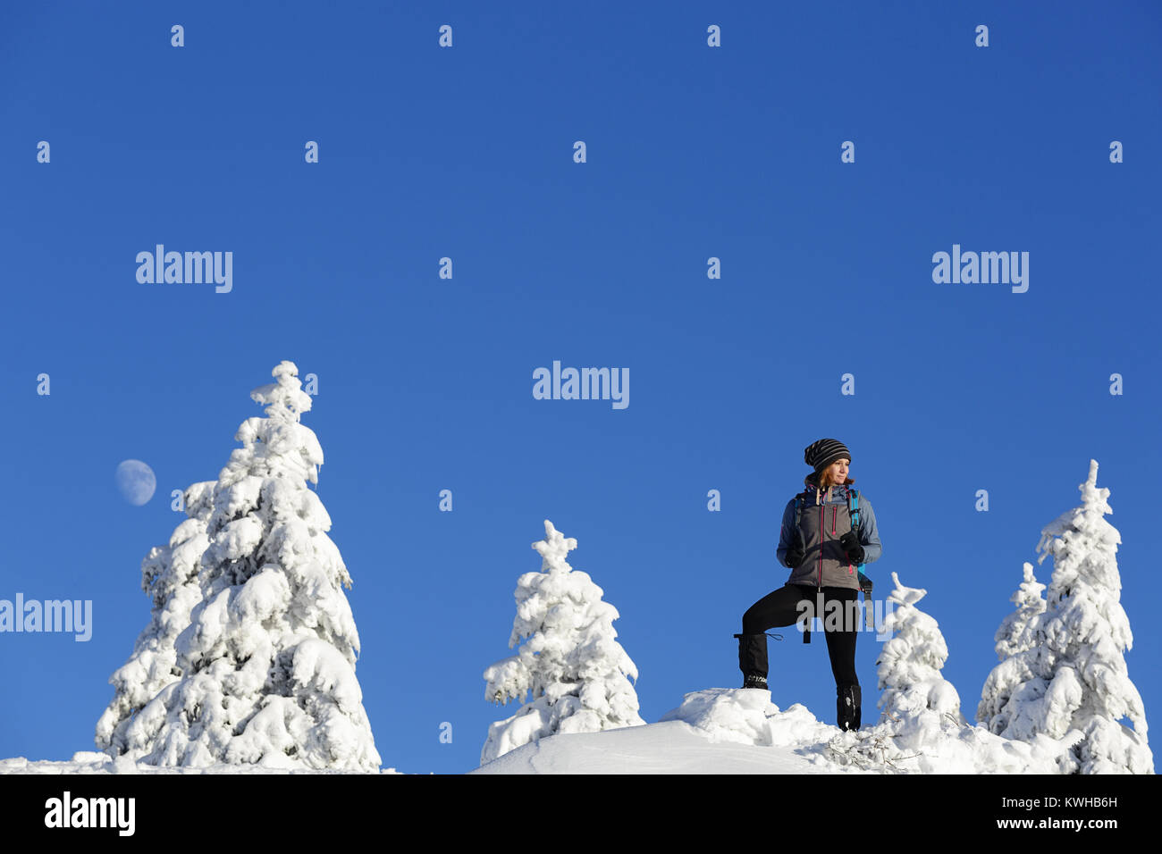Woman hiker in active outfit standing on a hill covered with snow between spruces in daylight with moon on the blue - Stock Image