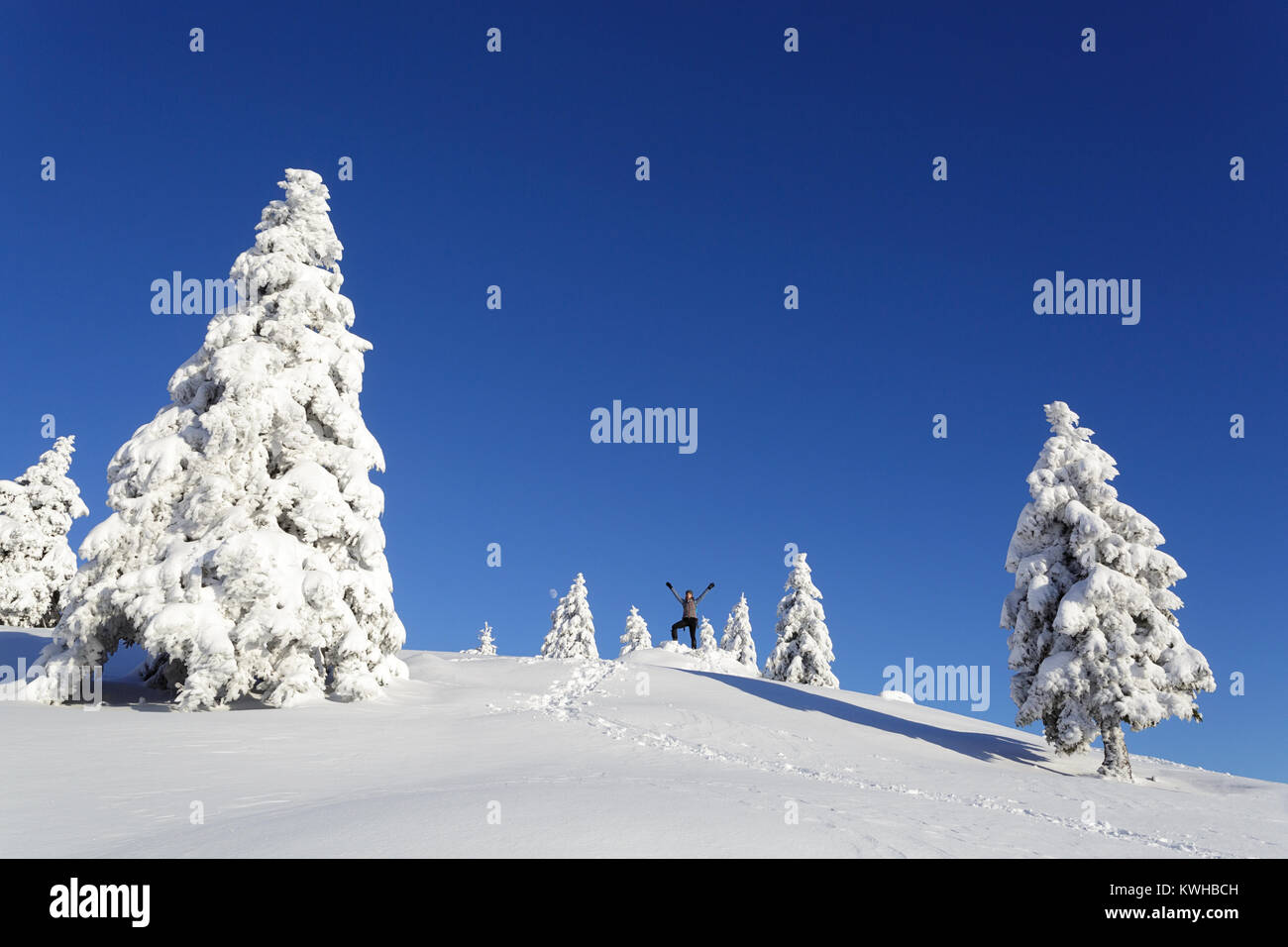 Woman hiker in active outfit, raised hands, standing on a hill covered with snow between spruces in daylight, moon - Stock Image