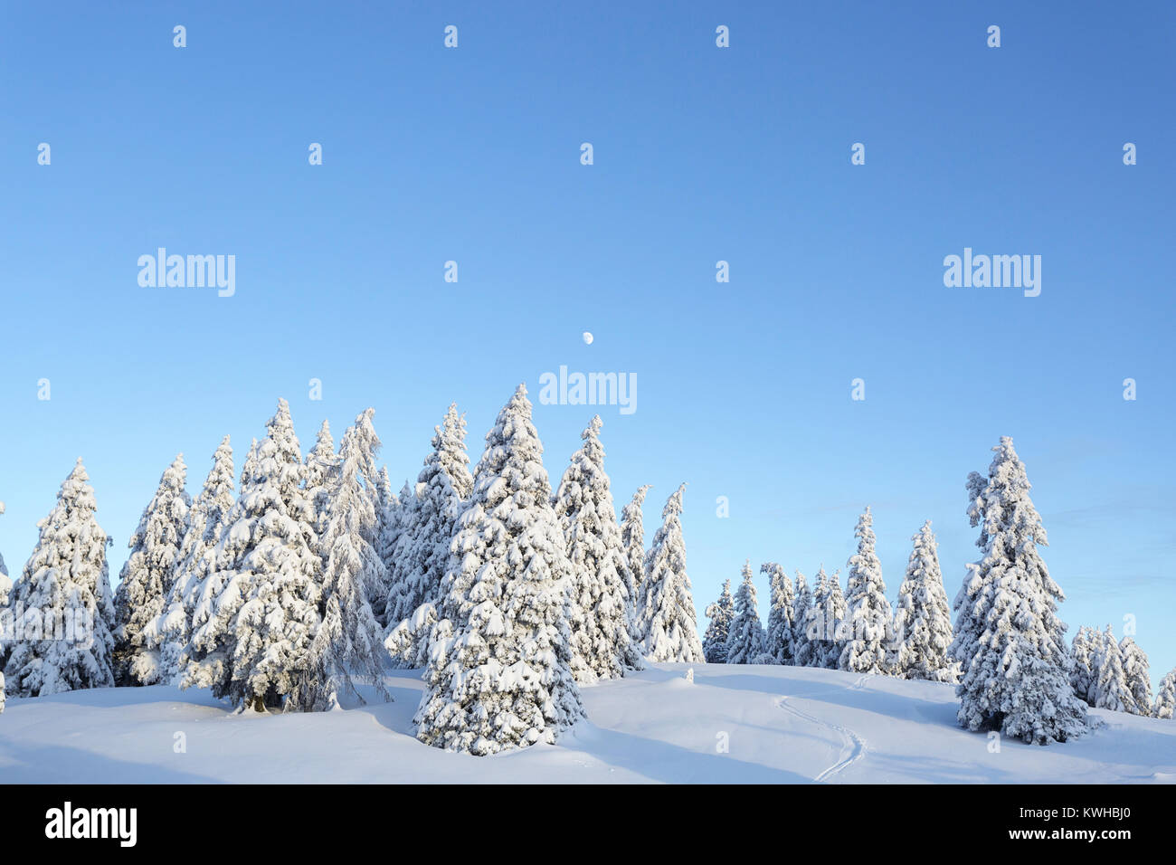 Winter wonderland, frozen spruces on a snow covered mountain, Krvavec, Slovenia. Stock Photo