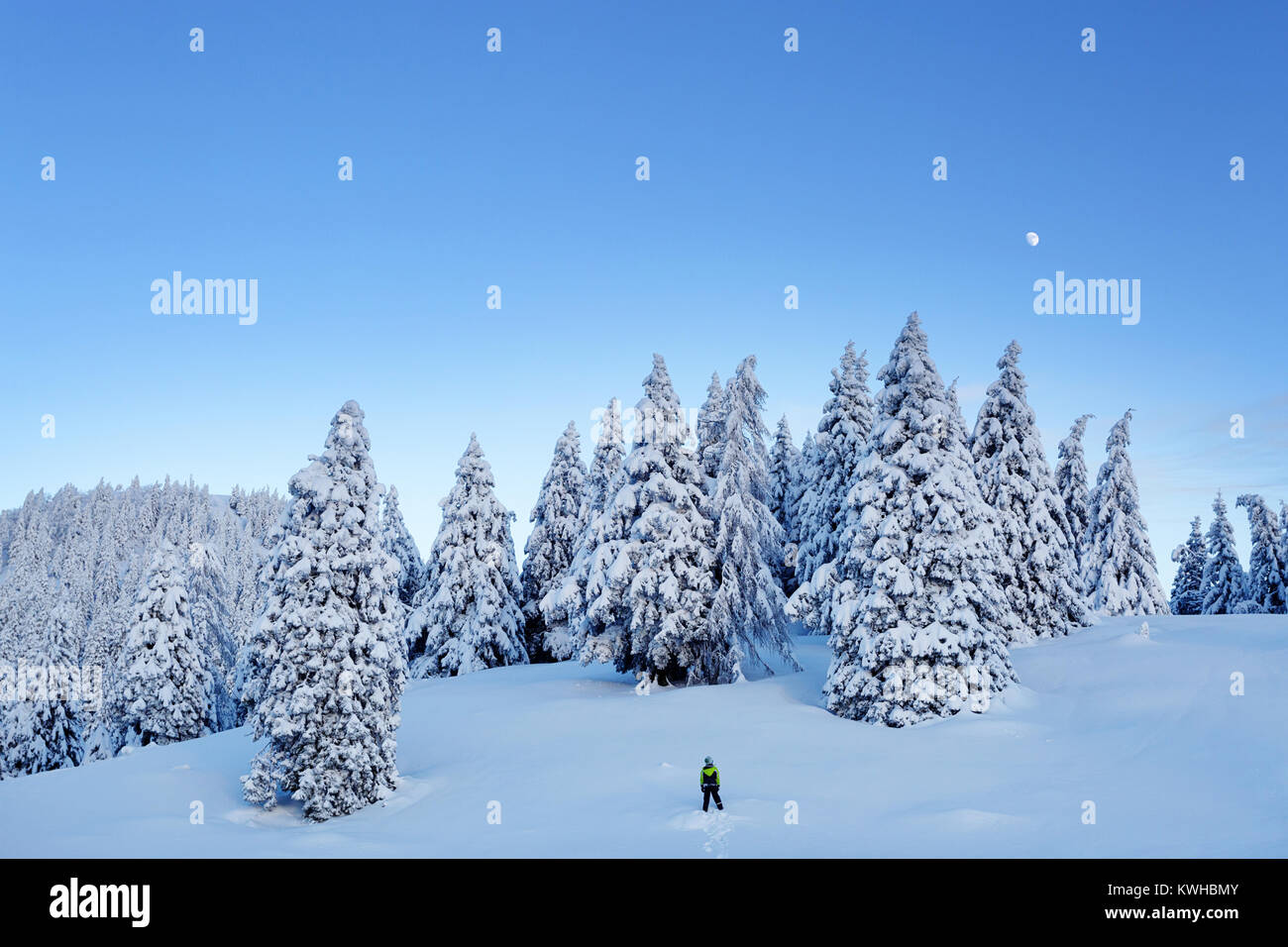 Young boy standing on snow covered mountain in front of spruce forest looking at the moon on a bright evening, Krvavec, - Stock Image