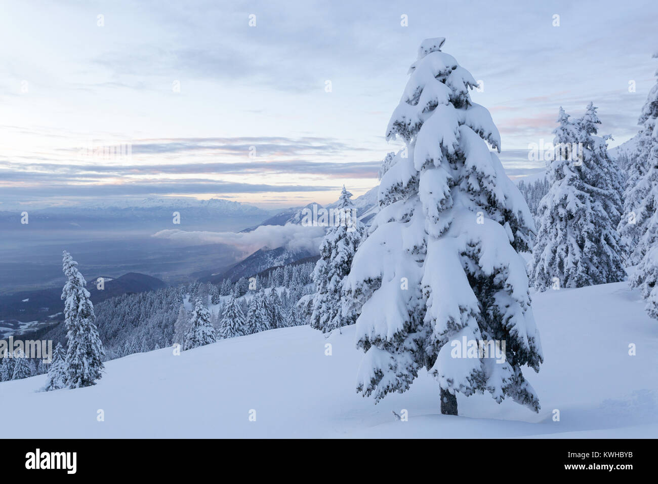 Winter wonderland, frozen spruces on a snow covered mountain, view over the valley, Krvavec, Slovenia. - Stock Image