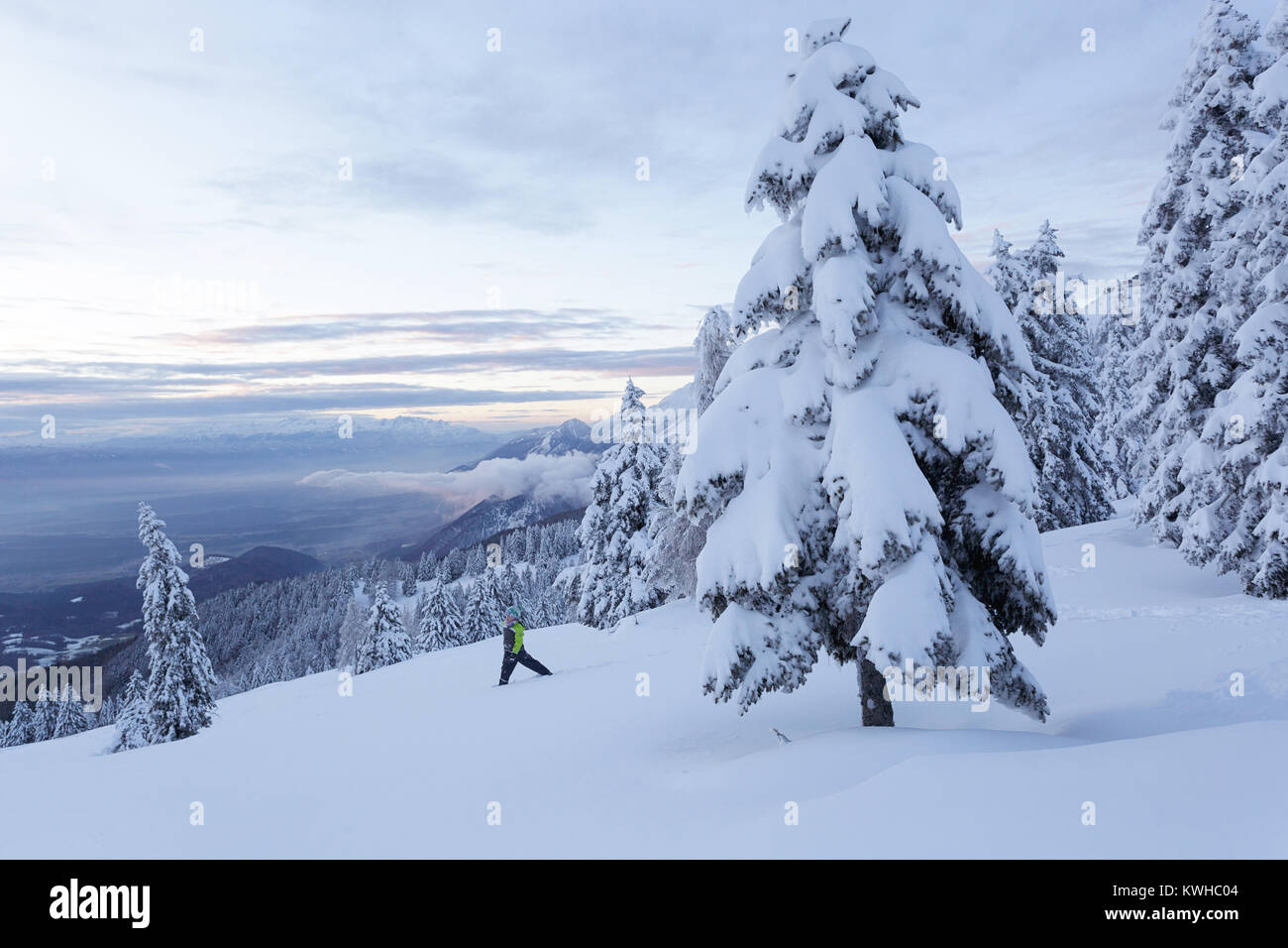 Young boy playing in fresh snow on a mountain with forest of frozen spruces, Krvavec, Slovenia. - Stock Image