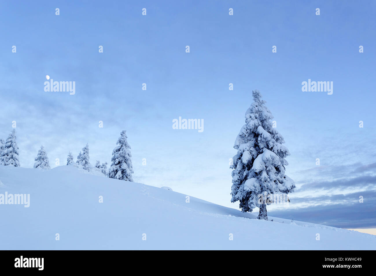 Winter wonderland in the evening with the moon, frozen spruces on a snow covered mountain, Krvavec, Slovenia. - Stock Image