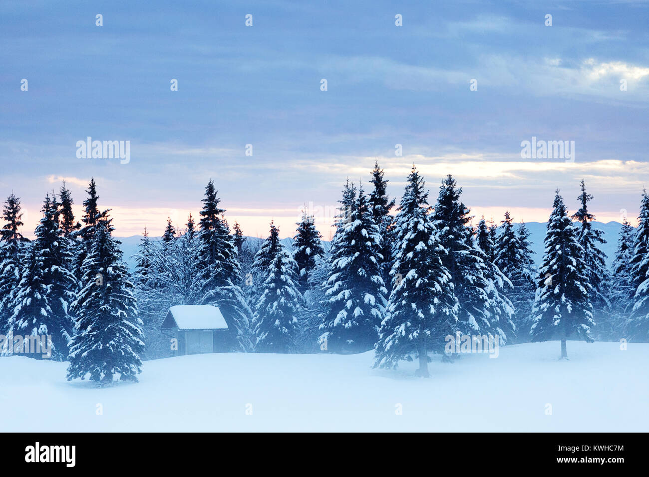 Little building covered with snow on a foggy, misty evening in a forest of frozen spruces, Krvavec, Slovenia. - Stock Image