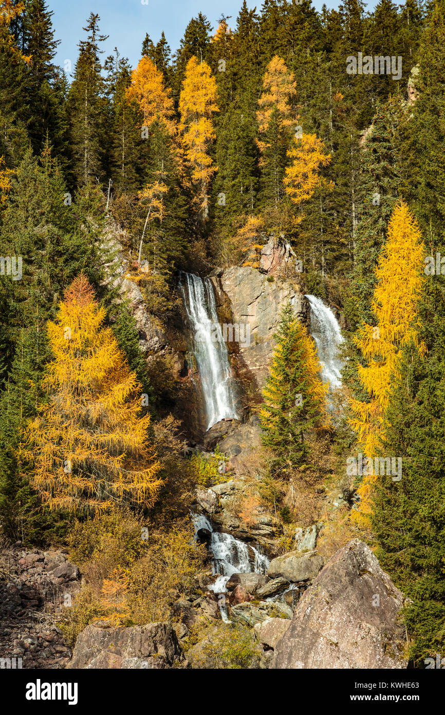 Fall foliage color in the larch trees and a Dolomite mountain waterfall near Padola, Belluno, Italy, Europe. - Stock Image