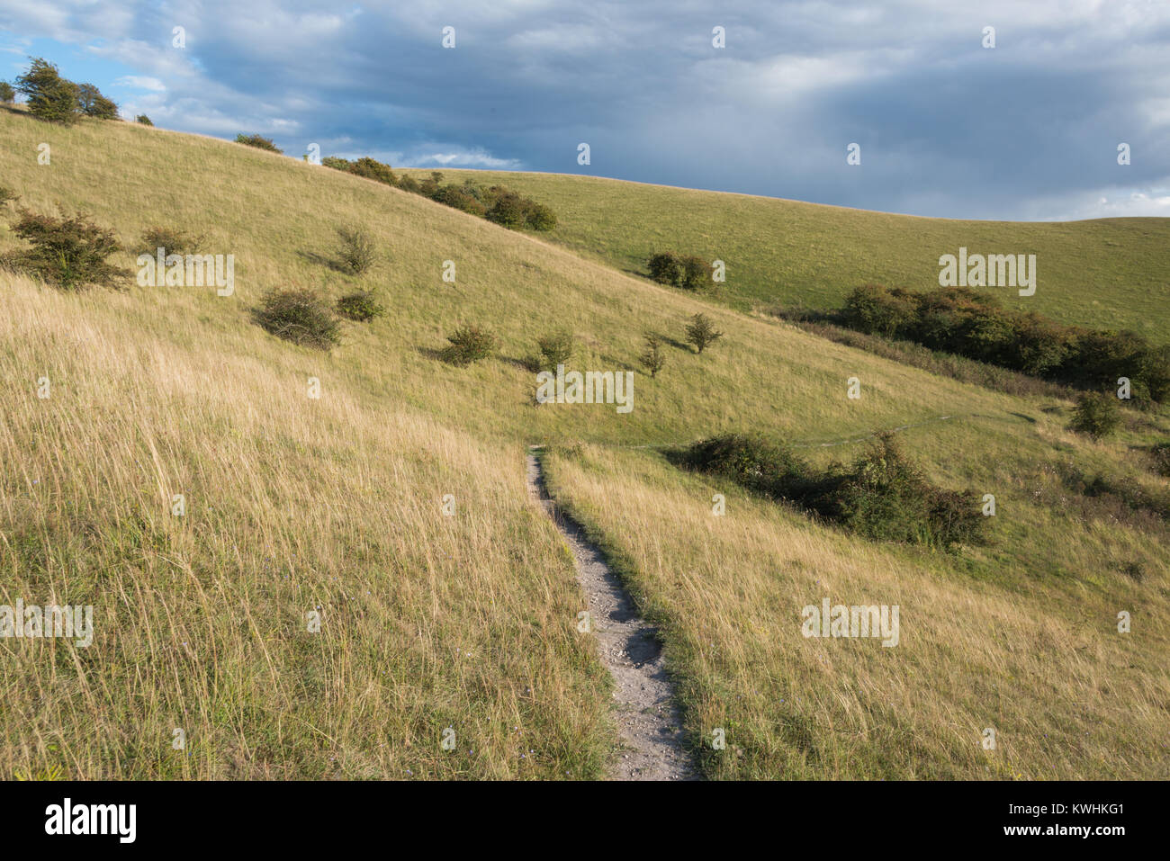 Barton Hills National Nature Reserve in Barton-le-Clay, Bedfordshire - Stock Image