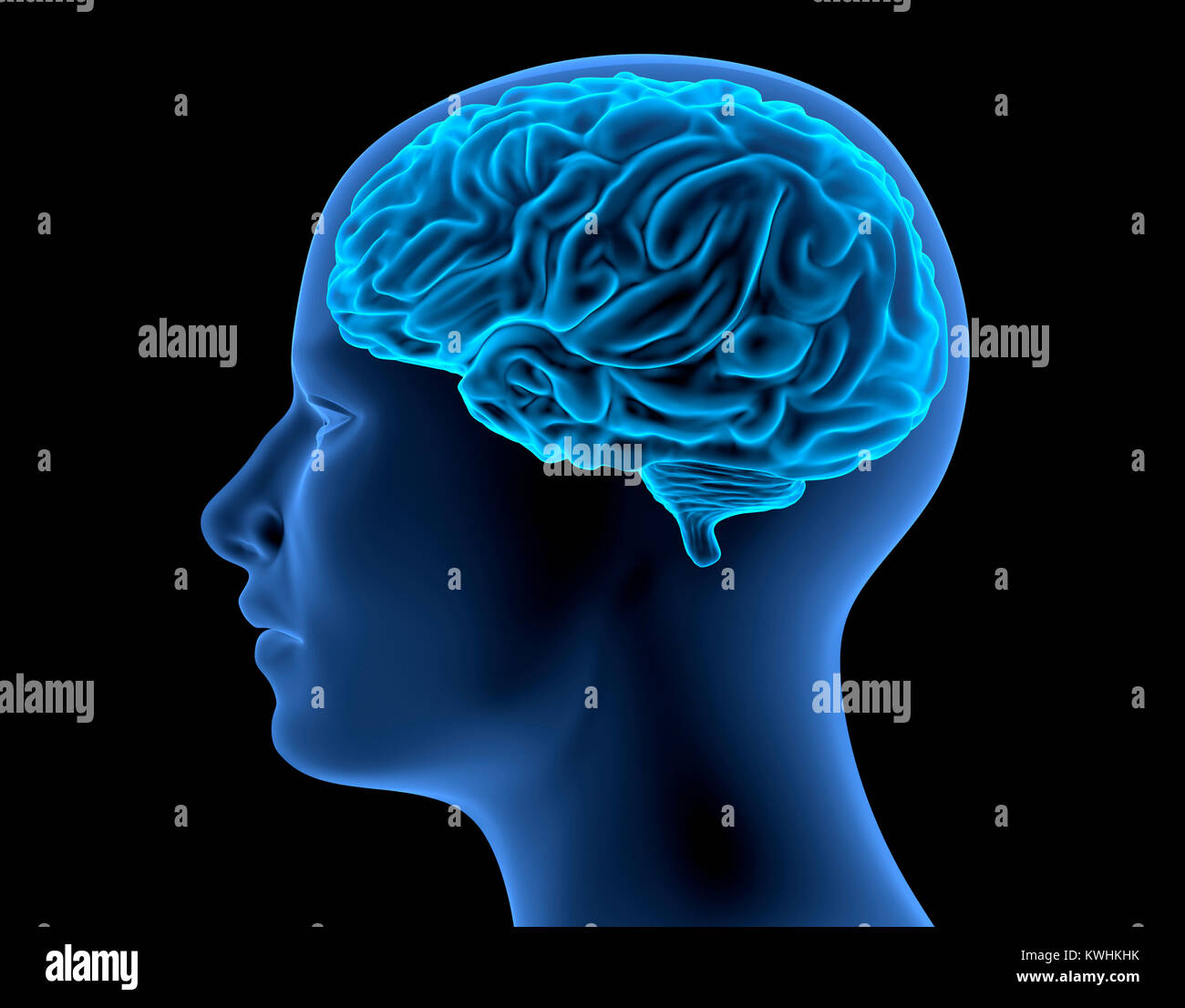 The Human Body - Brain. X-Ray Effect. 3D illustration - Stock Image