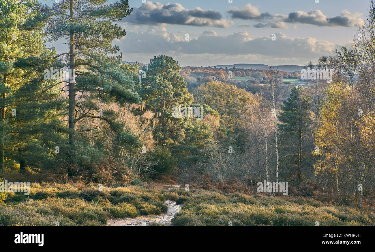 Landscape View over heathland and woodland at Hesworth Common, Sussex, England Stock Photo