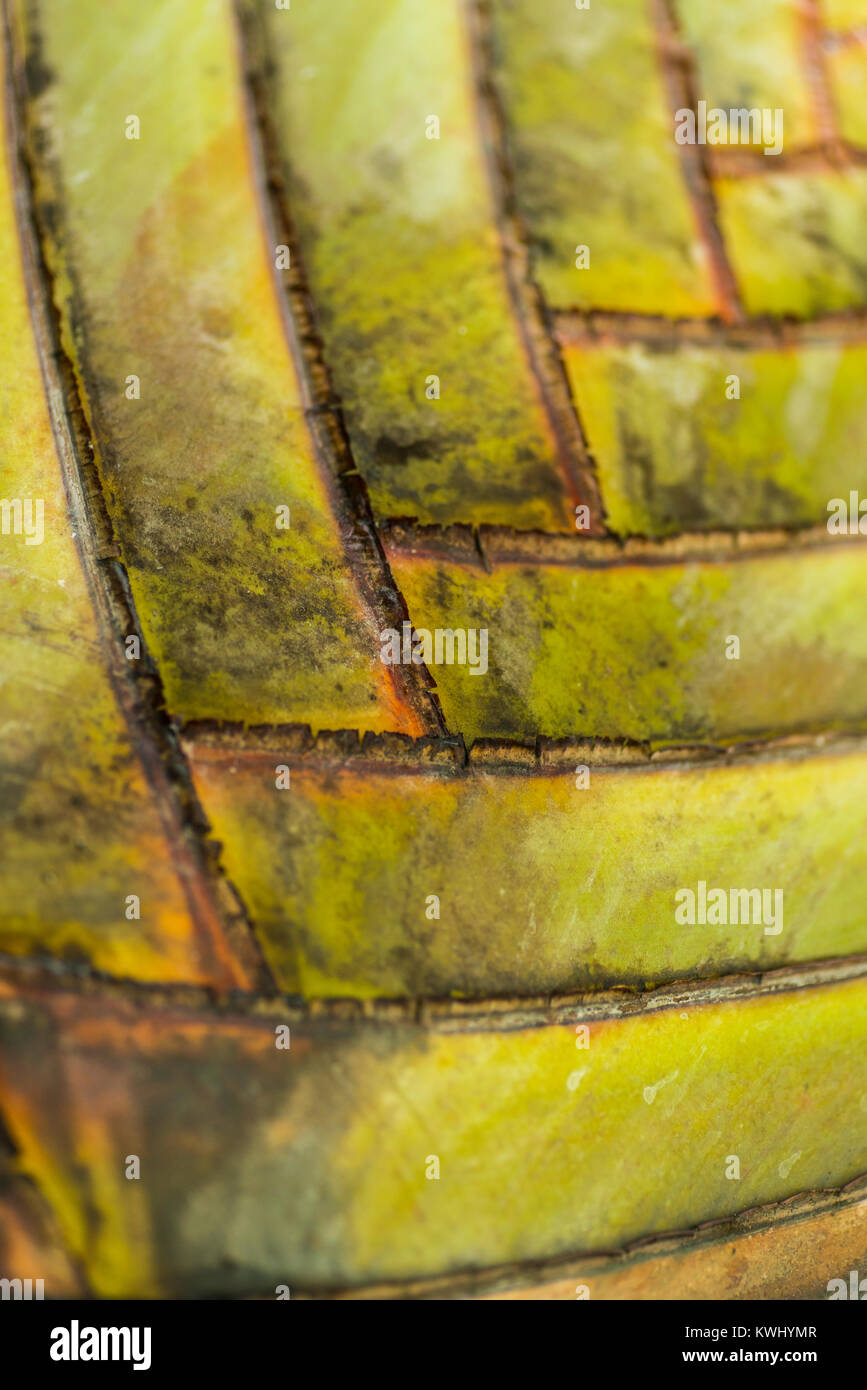 Cross-processed patterns on a palm tree - Stock Image