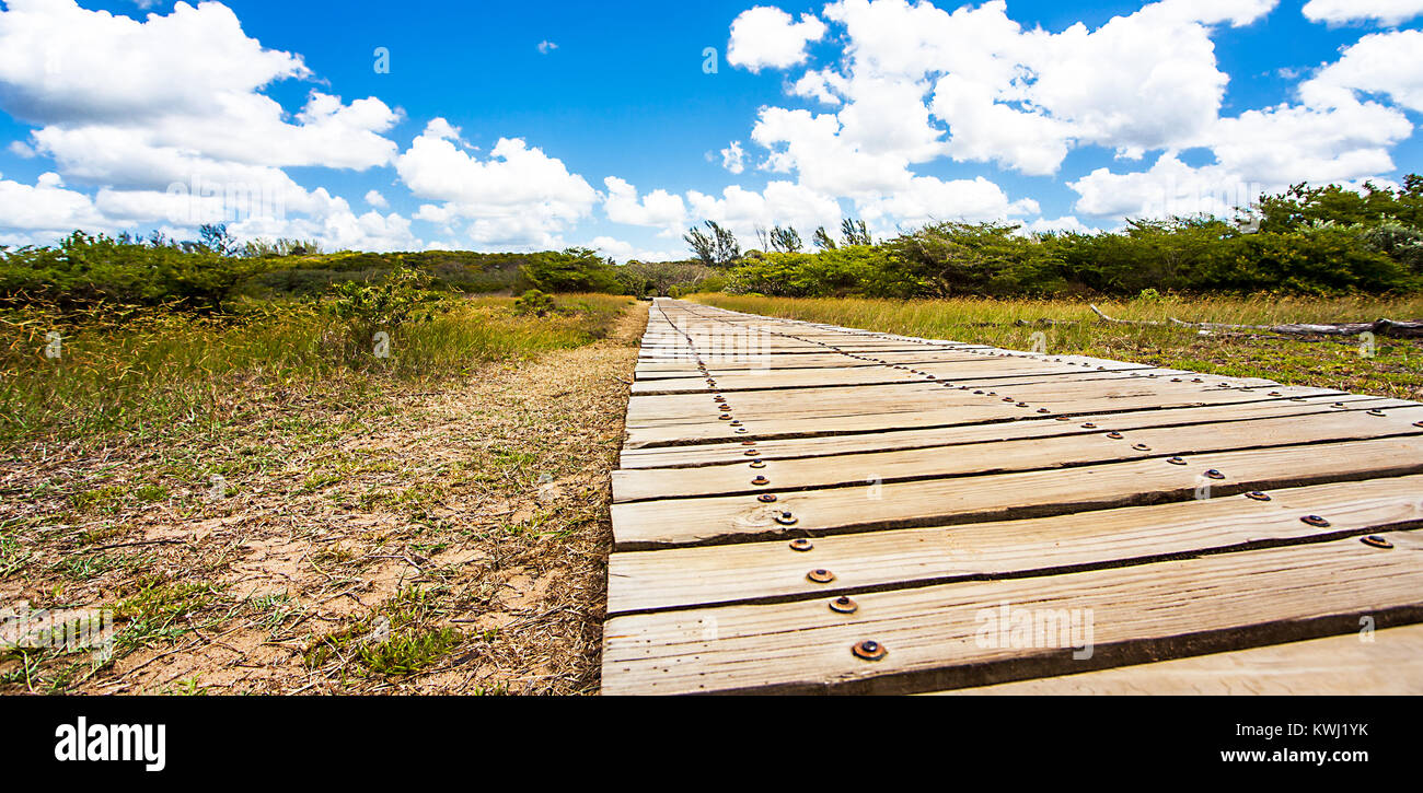 Estuary Boardwalk am San Lucia River Südafrika - Stock Image