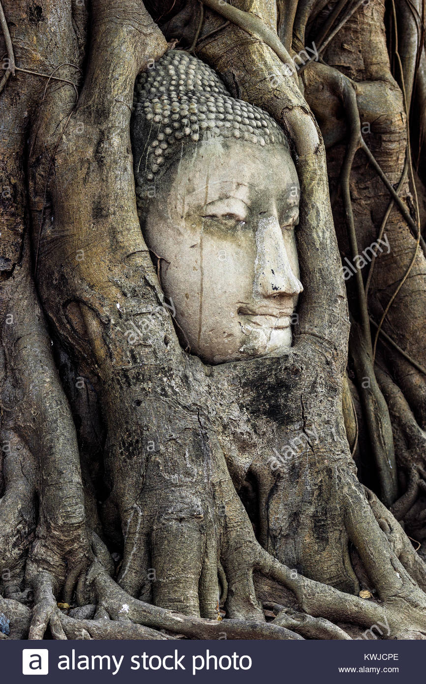 Thailand : Ayutthaya - Wat Mahathat - Buddha head in tree roots Stock Photo