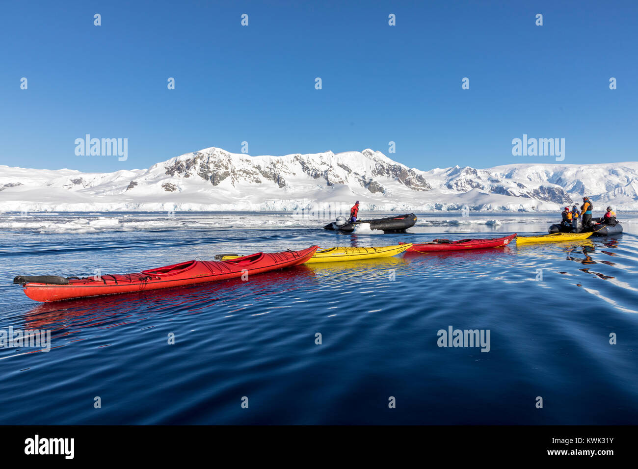 Guides in Zodiacs tow empty kayaks used to explore snow covered Antarctica back to the Ocean Adventurer; cruise - Stock Image