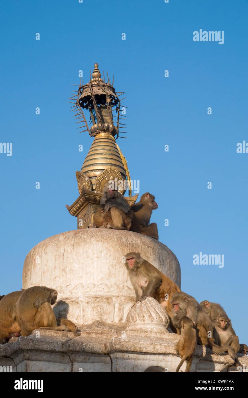 Rhesus macaque monkeys sitting on top of stupa at Swayambhunath (Monkey Temple) in Kathmandu, Nepal - Stock Image