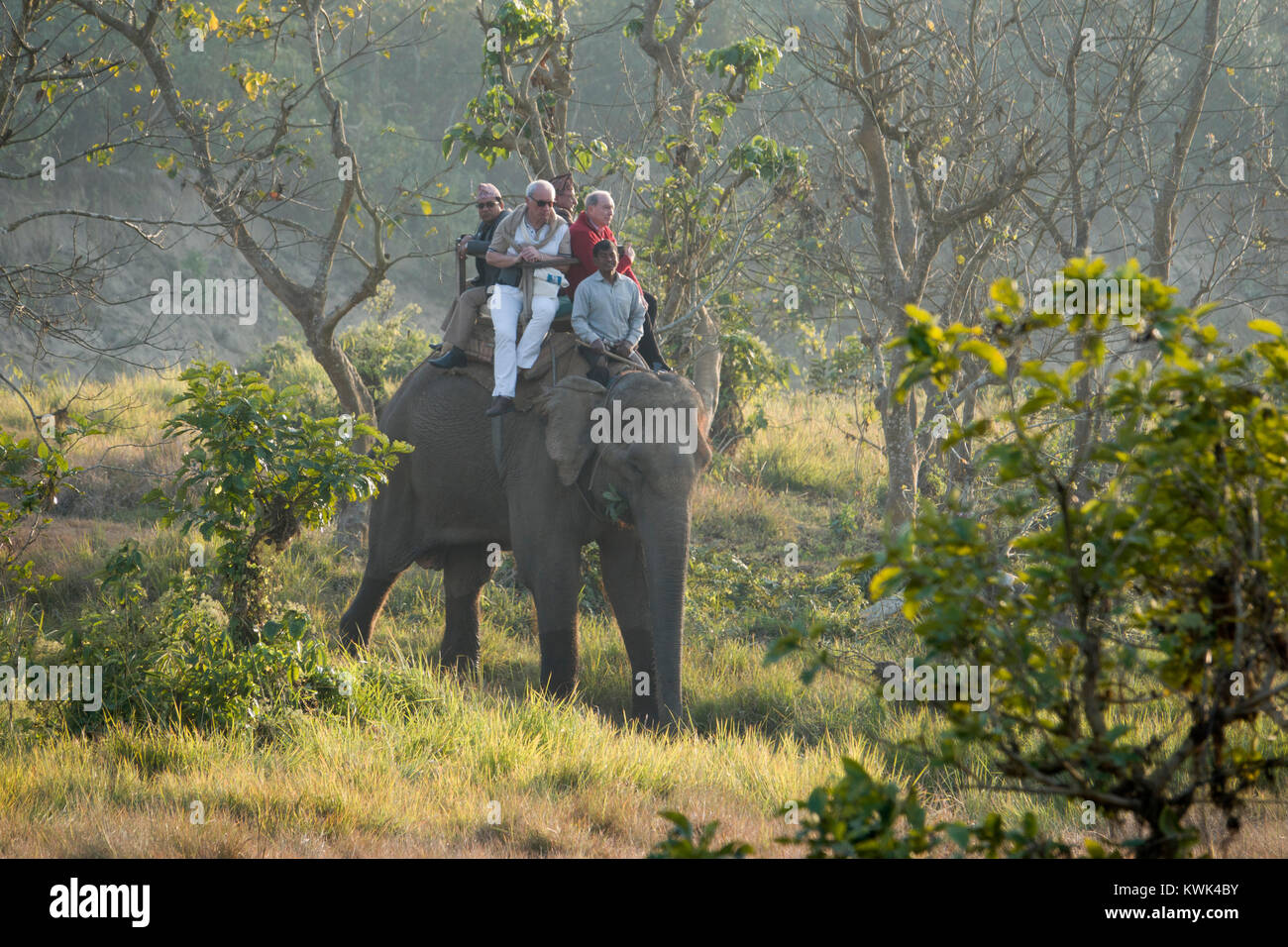Tourists on elephant jungle safari in Chitwan national Park, Nepal Stock Photo