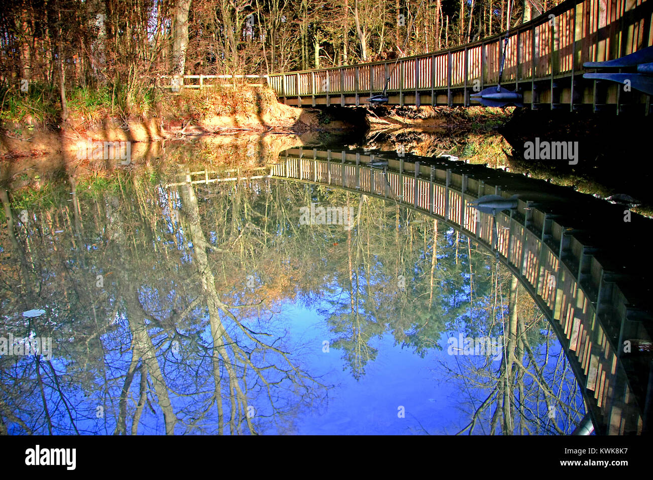 Salcey Forest Stock Photos Salcey Forest Stock Images Alamy
