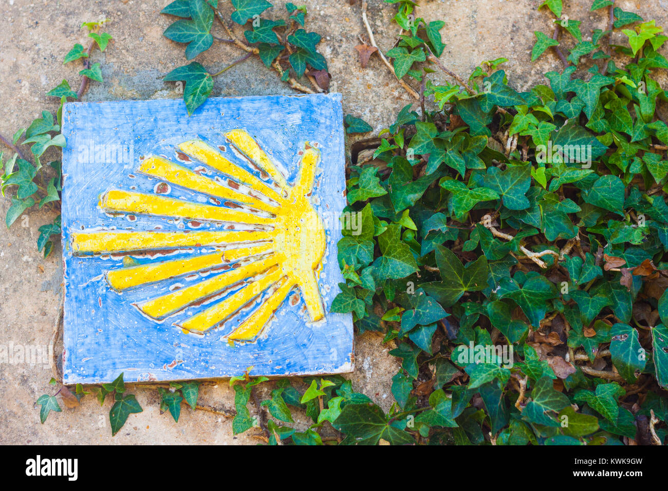 Camino de Santiago, or Way of Saint James, shell sign on the stone wall with ivy leaves - Stock Image