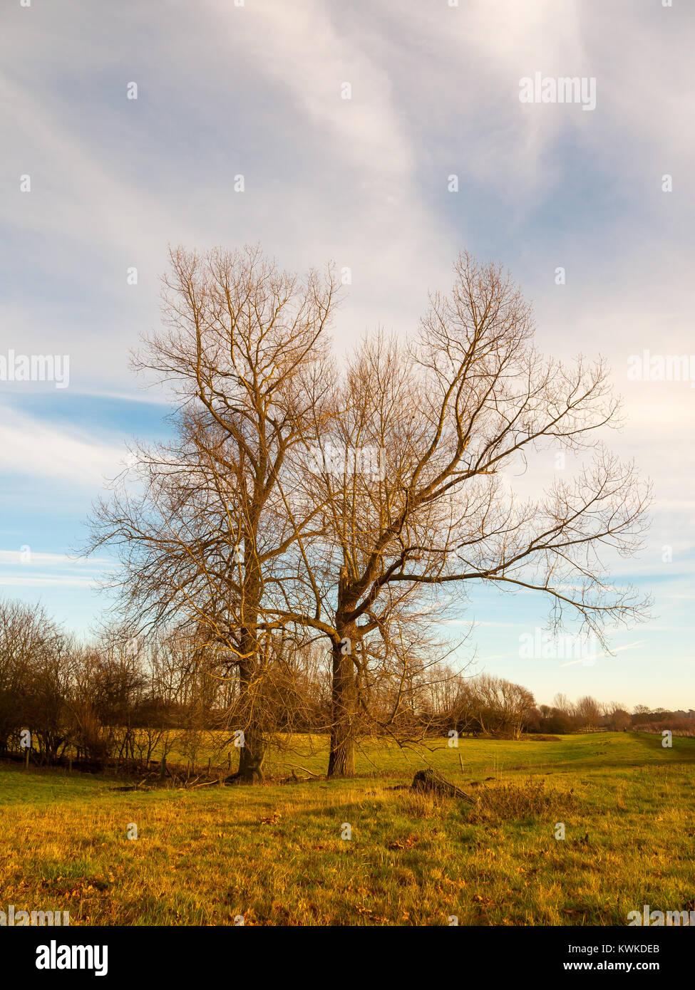 Spring Summer Autumn Winter Trees Stock Photos & Spring ...