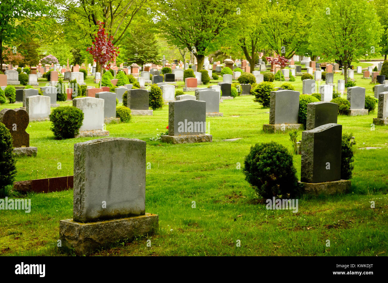 Cemetery showing grave stone stretched out into the distance with trees and shrubs around the grave stones - Stock Image
