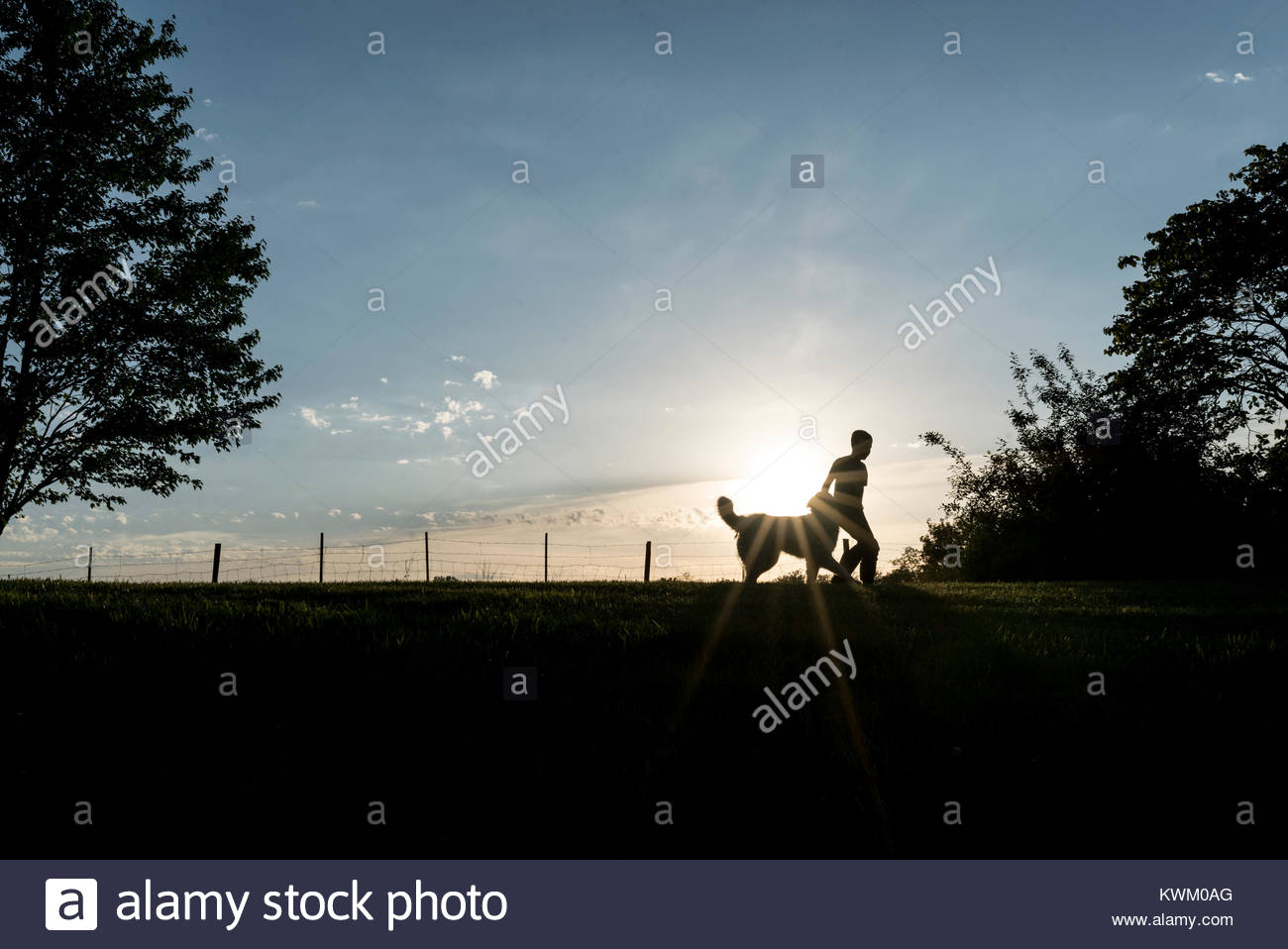 Silhouette boy with dog on field against sky during sunset - Stock Image