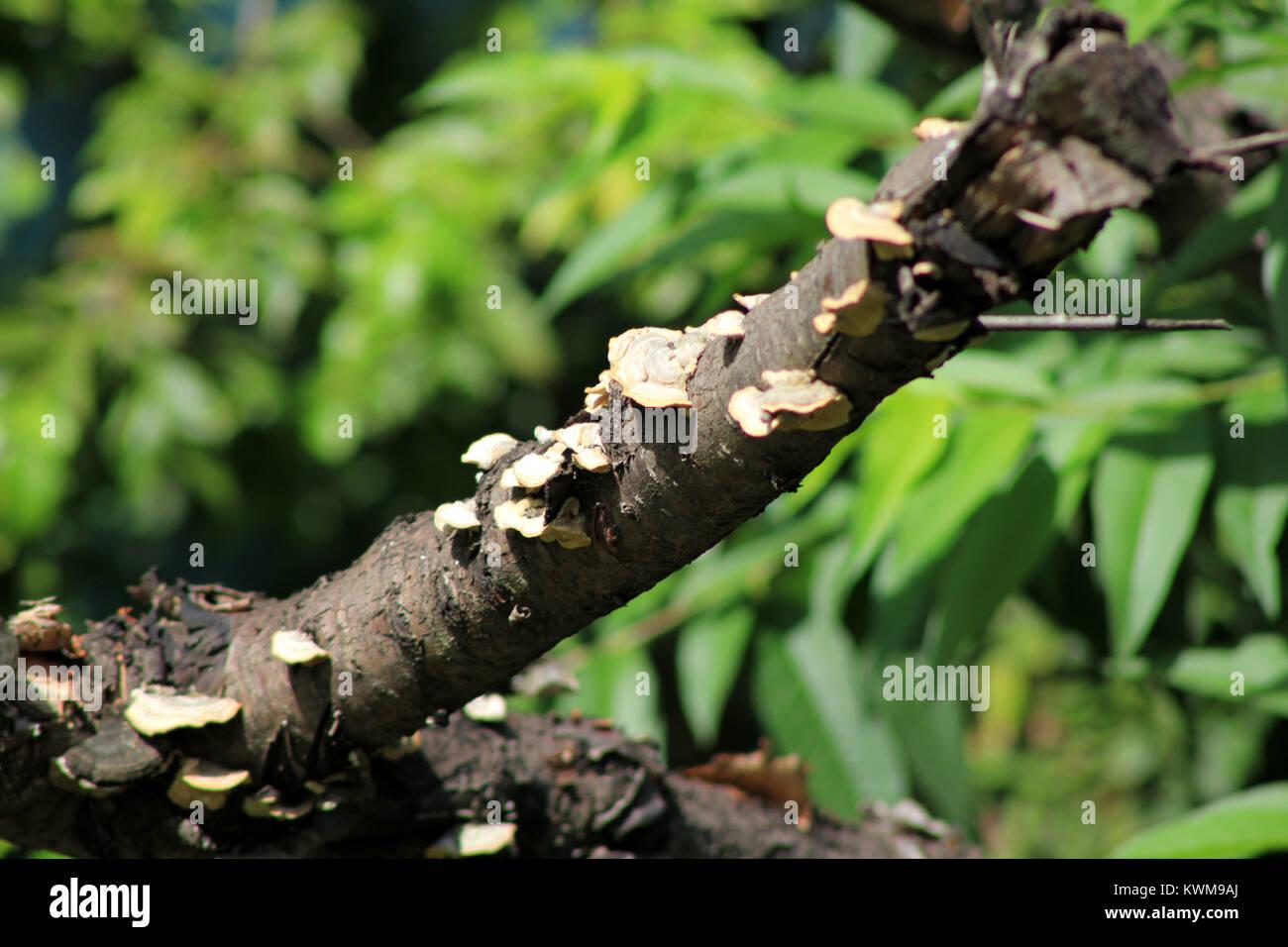 fungi wood decomposition Stock Photo