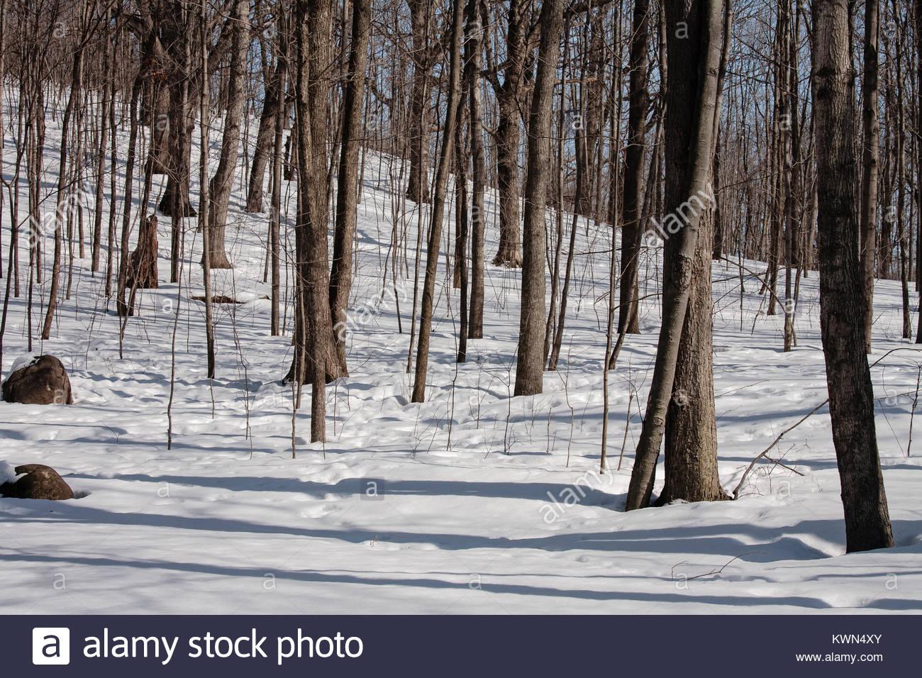 woods snow shadows stock photos  u0026 woods snow shadows stock images