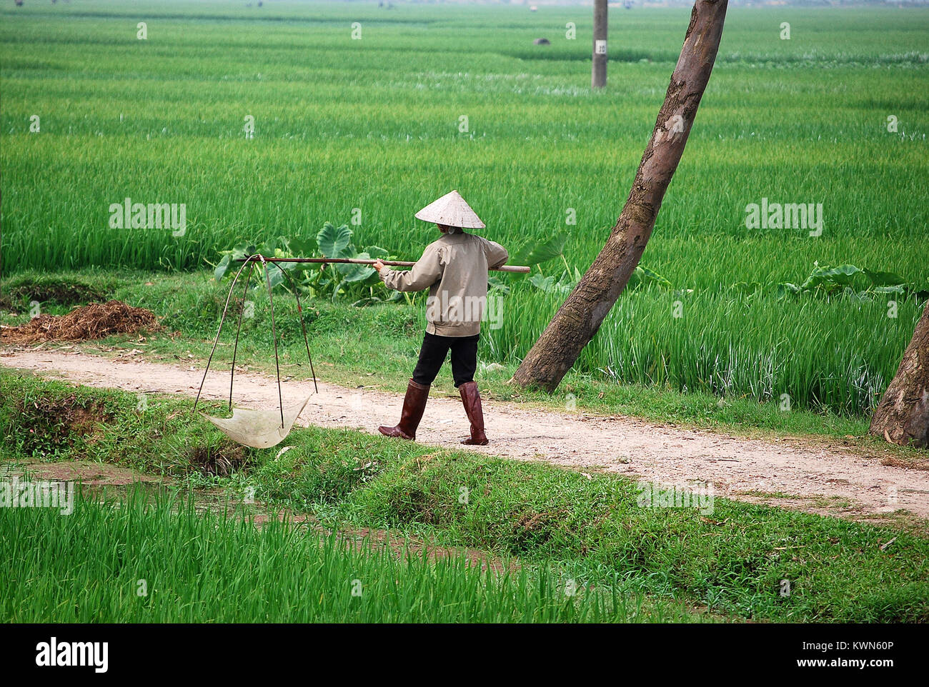 Man hunting frogs in the rice paddy, Vietnam. He wears a typical Vietnamese hat. - Stock Image