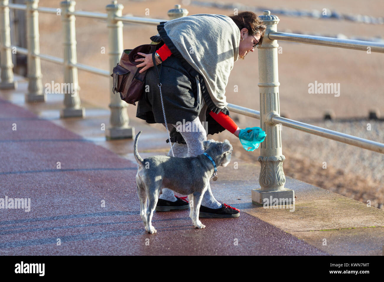 A woman bends over and picks up dog mess with a doggy bag on the hastings promenade, East Sussex - Stock Image