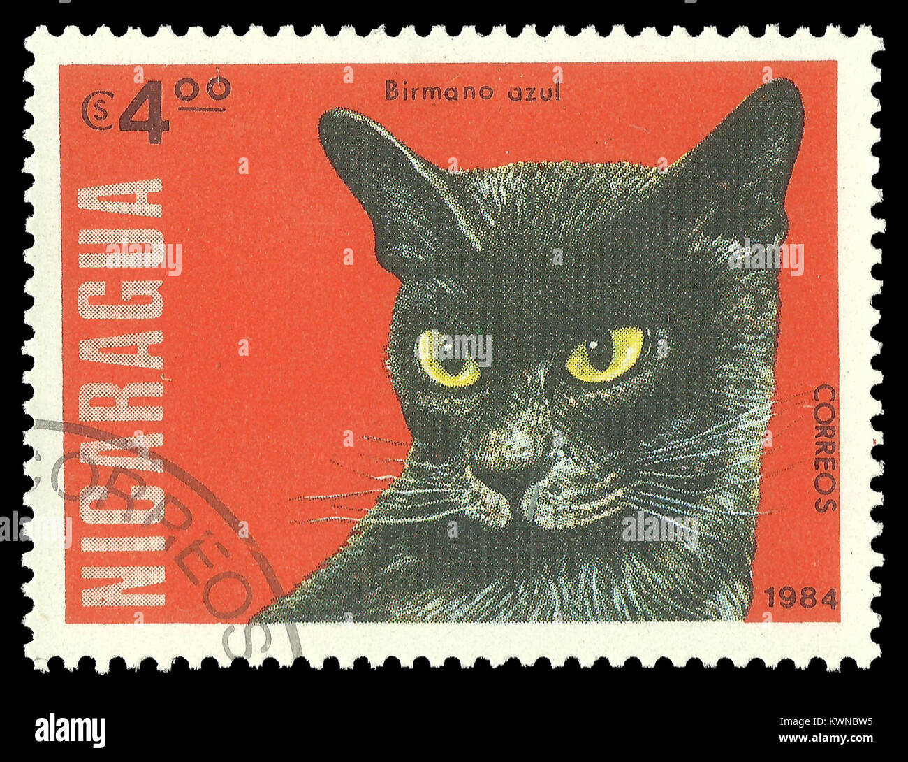AmiCats Burmese Cat amigurumi crochet pattern : PlanetJune Shop ...   1090x1300