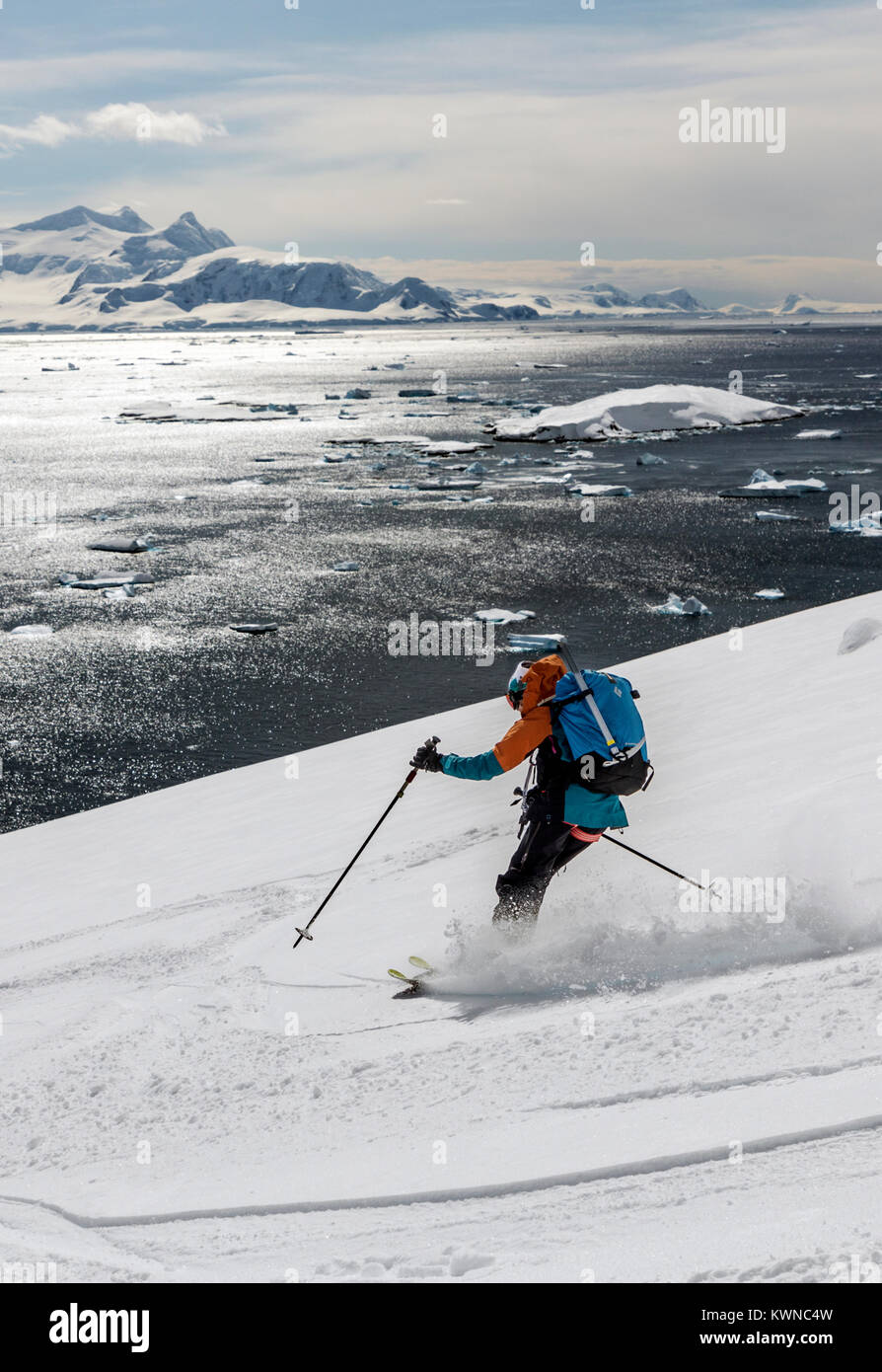 Female alpine ski mountaineer skiing downhill in Antarctica; Rongé Island; Arctowski Peninsula - Stock Image