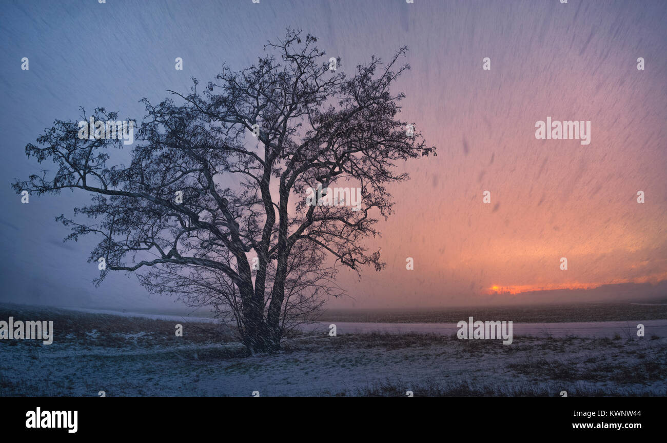Snowstorm in Tempelhof, with the snow filtering the sunset at the horizon. Winter evening. - Stock Image