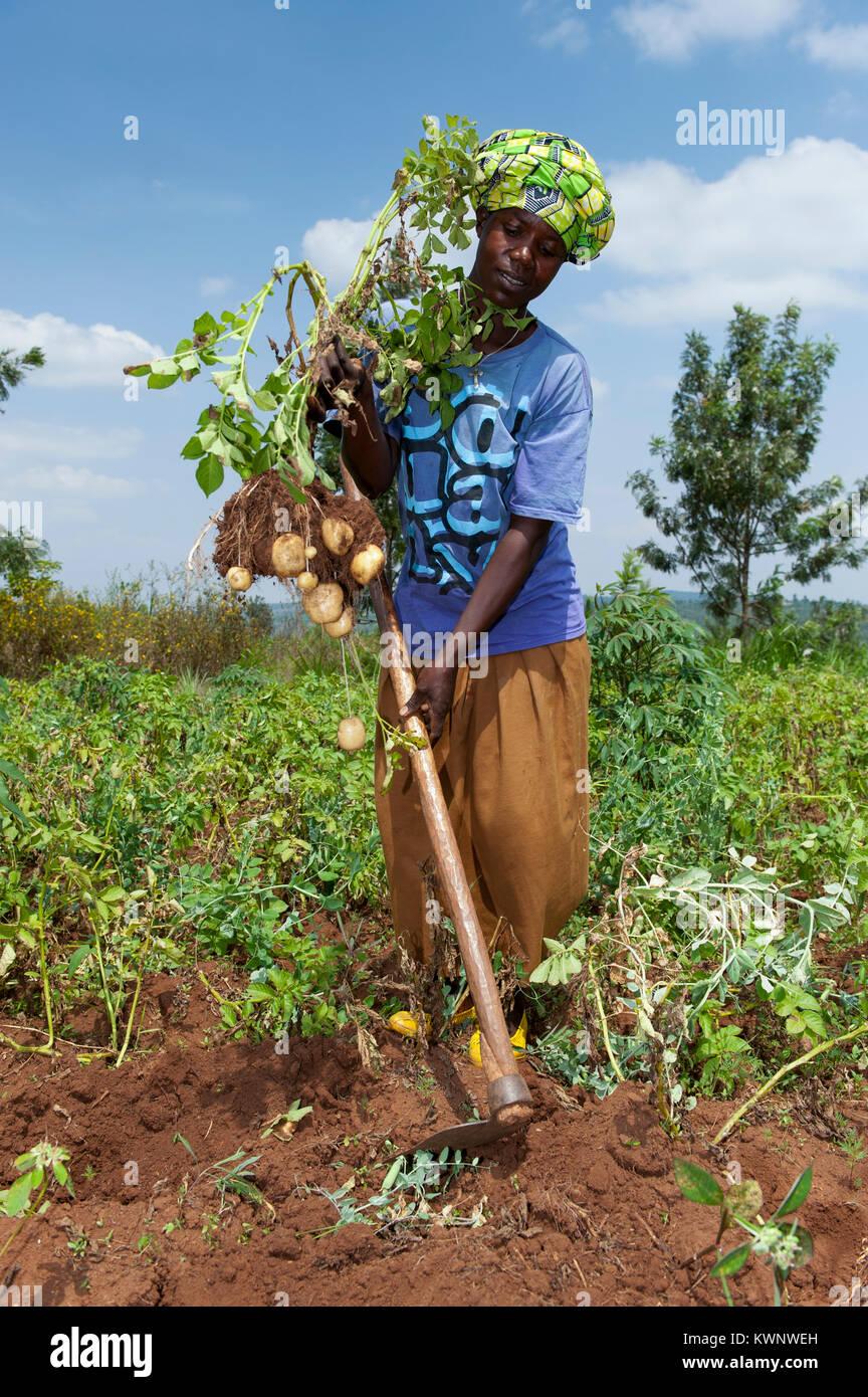 Farmer hoeing potato field in rural Rwanda - Stock Image