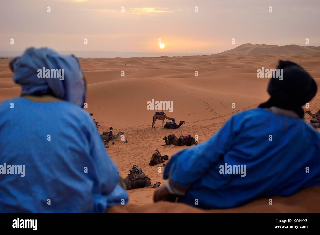 Berbers watching the sunrise on a camel excursion to the sand dunes at Merzouga, Morocco, North Africa - Stock Image