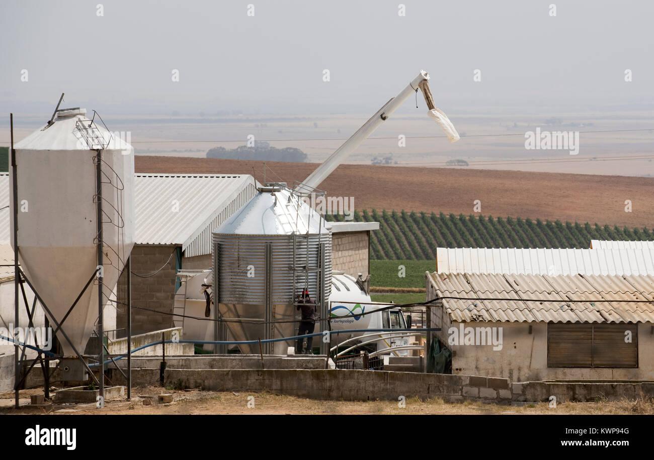 Riebeek West, Swartland region Western Cape South Africa. December 2017. Poultry farm. - Stock Image