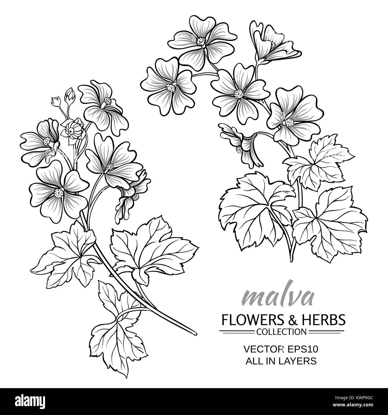 malva plant vector set on white background - Stock Image
