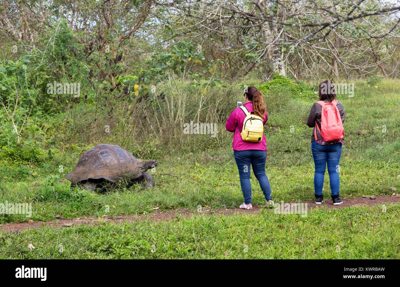 Tourists photographing a Giant tortoise, Santa Cruz, Galapagos Islands, Ecuador South America - Stock Image