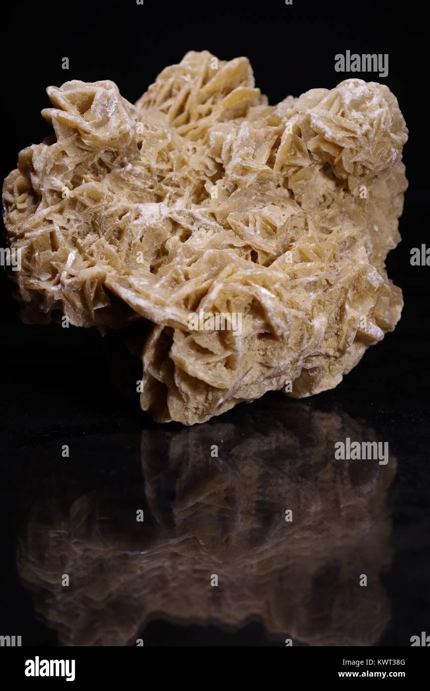 Desert Rose Gypsum, an Evapourite Mineral Crystal Specimen, Rosette Petal Structure. Macro Photo, Devon, UK. January, - Stock Image