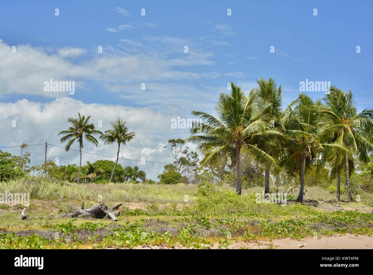 Palms powerlines goats foot plant and driftwood on Bagal Beach near Townsville, Queensland, Australia - Stock Image